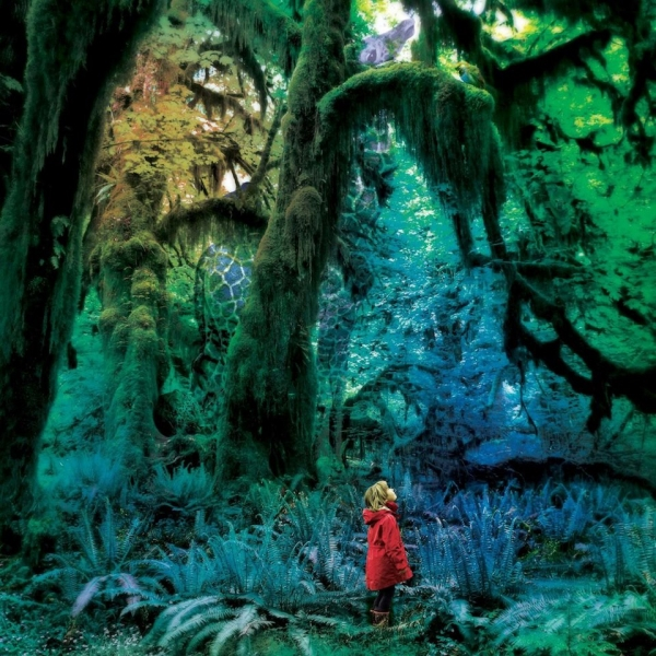 Jacco Gardner Cabinet of Curiosities cover art